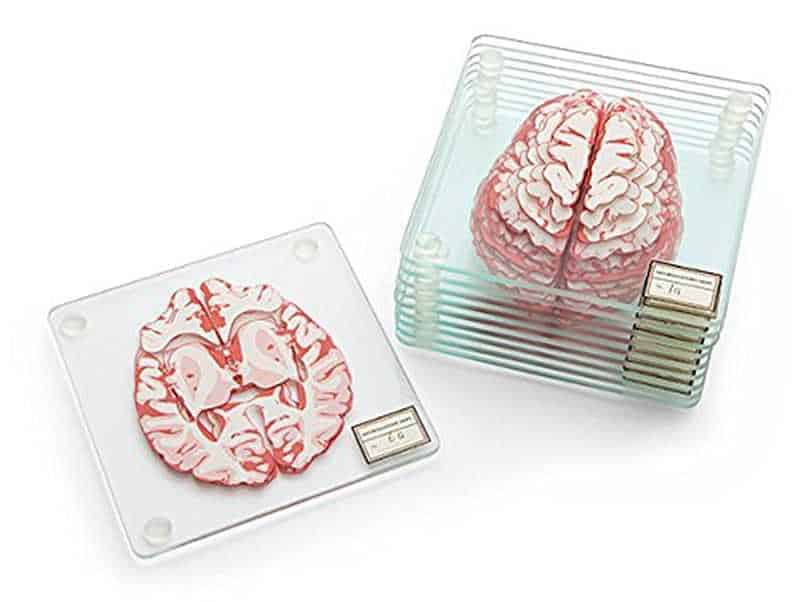 Brain section drink coasters