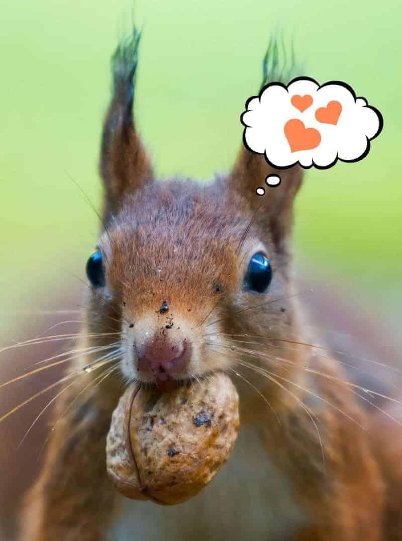 A happy squirrel celebrating his blogging anniversary