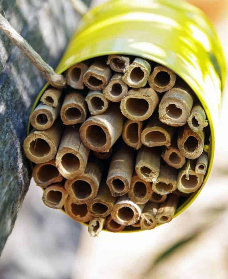 Earth Day bee house