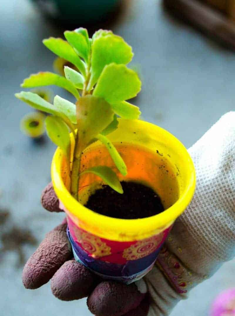 Earth Day DIY planter for kids