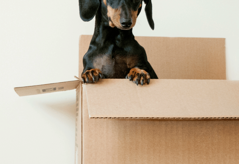 A dog in a free box