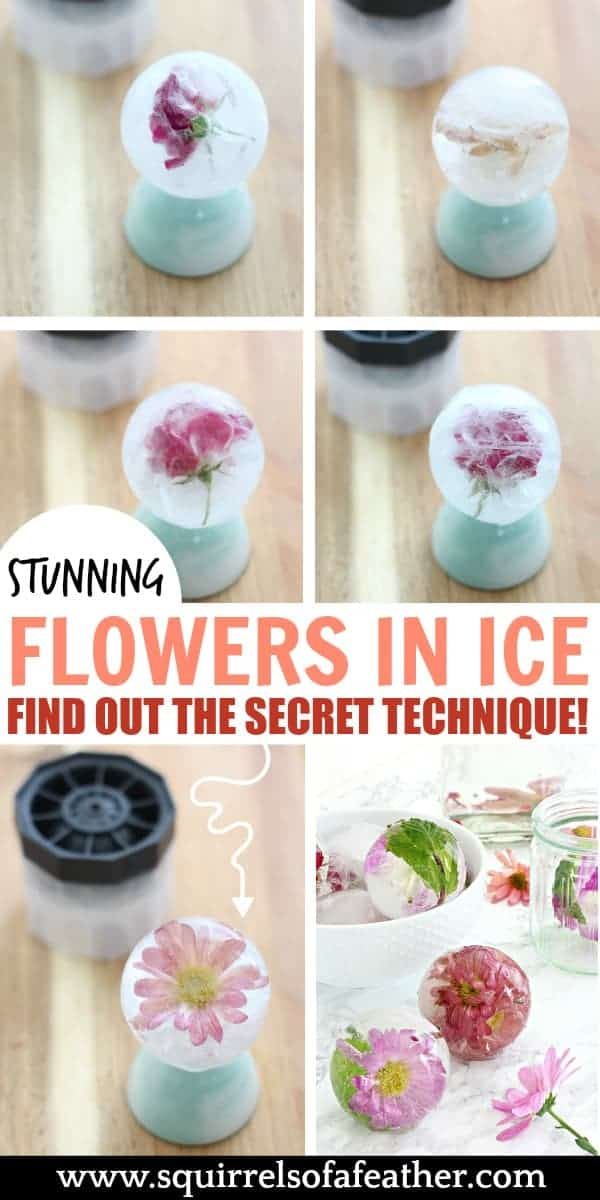 Infographic showing how to freeze flowers in ice